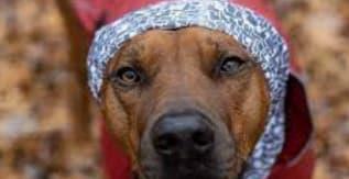 Kurgo Dog Scruff Scarf