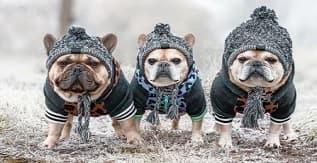 Pengbu Knitted Winter Headwear for Dogs