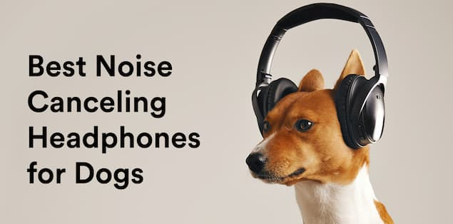 8 Best Noise Cancellng Headphones for Dogs
